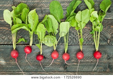 Fresh radish on old wooden table. Radish background. Rustic Style.