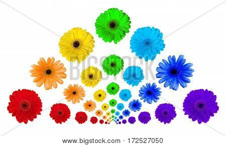 Pretty rainbow from gerbera on a white background