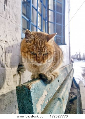 General view of the red-haired cat which is sitting on the bench