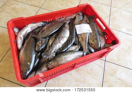 A box of fresh salmon on the fish market in Bar-city, Montenegro,