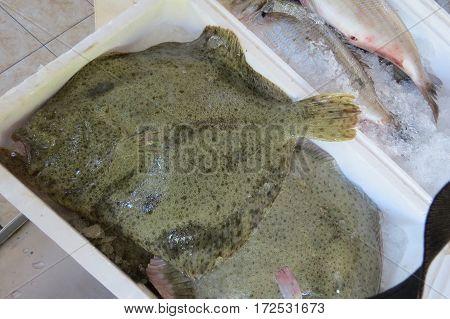 Fresh flounder (plaice, flatfish, Scholle, Flunder) in the fish shop in Bar-city, Montenegro.