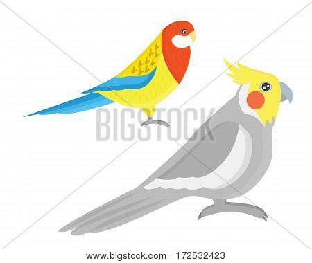 Cartoon tropical parrot wild animal bird vector illustration. Wildlife cute feather zoo color nature vivid. Perch tropics fly fauna jungle pretty macaw.