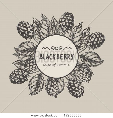 Blackberry Raspberry design template. Blackberry Raspberry branch engraving illustration. Vector illustration