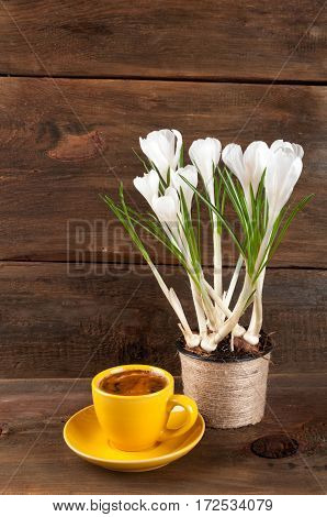 Coffee cup and spring crocus flowers in a pot on wooden rustic background with copy space. Still life with coffee and flowers.