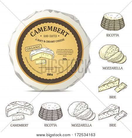 Round cheese mockup with camembert label. Vector illustration with vintage sticker. Hand drawn template used for advertising cheese and graphic icons good for logo design or emblem creation.