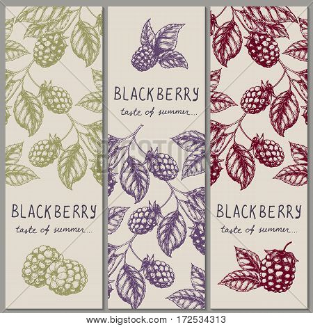 Set of vintage hand drawn blackberry raspberry vertical orientation banners. Vector illustration.