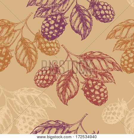 Raspberry blackberry seamless pettern. Vector illustration EPS10