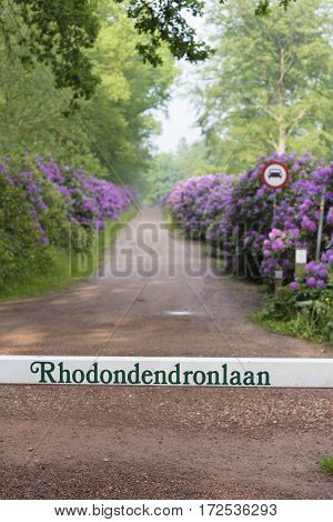 OLDENZAAL NETHERLANDS - MAY 27 2016: white pole with rhodedendron alley in dutch language in front of a lane with beautiful blooming pink rhododendron flowers