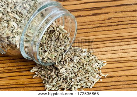 A Fennel Seeds