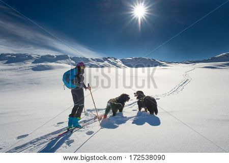 Lonely Girl In The Mountains With Ski Touring And Two Dogs