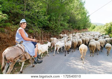 Woman On A Donkey With His Flock Of Sheep And Goats