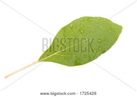 Leaf Green Water Drops 01