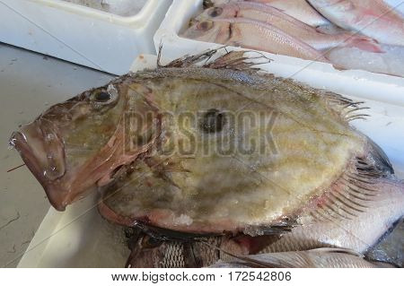 Sunfish (Fisch-Mond) in the fish shop in Bar-city, Montenegro.
