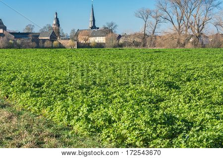 View of an Agra field in winter. Cultivated with winter vegetables.
