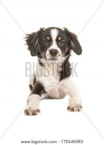 Mixed breed cute black and white puppy dog facing the camera lying on the floor on a white background seen from the front