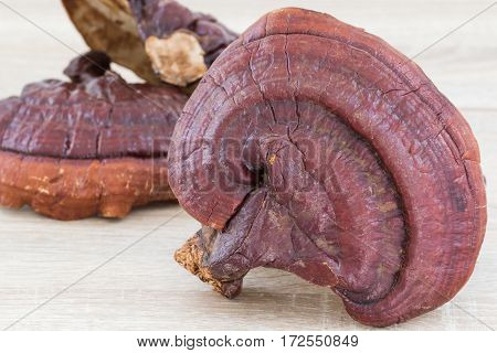Ganoderma Lucidum Mushroom On Wood Background