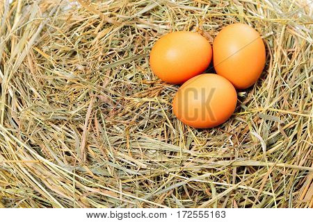 Three chicken eggs on the hay background