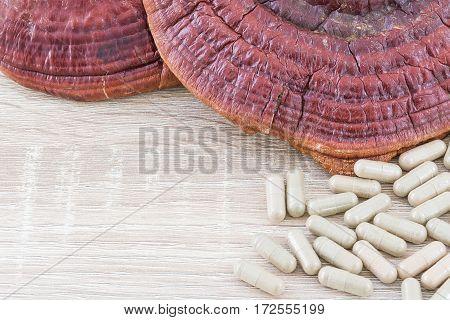 Ling Zhi Mushroom Or Ganoderma Lucidum Capsule