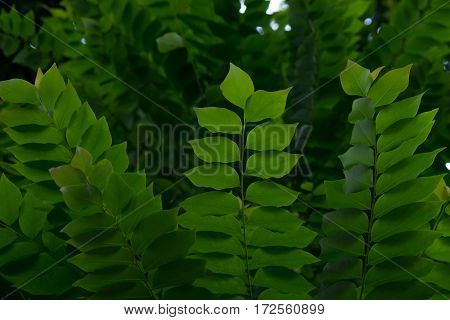 Green Leaf Of Tree In Deep Forest Background