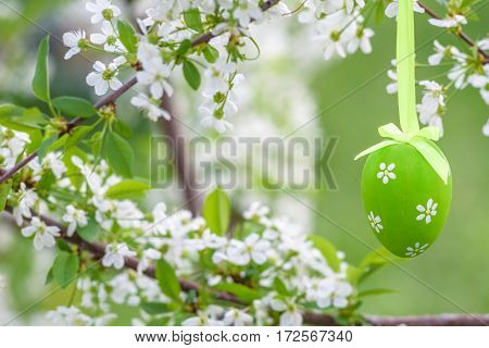 Several Easter Colored Eggs Hanging On A Tree Branch Color Sunny Spring Day.