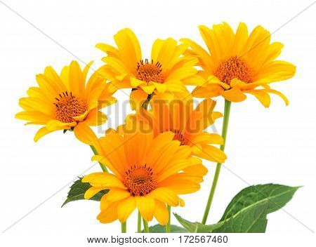 Five yellow flowers isolated on the white.