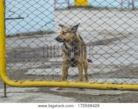 A lonely dog behind a fence looking somewhere