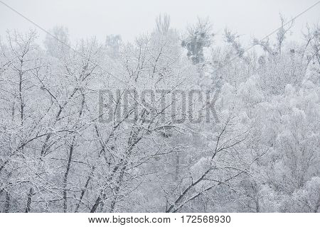 Fairy winter forest in the snow. Winter time. Heavy snowfall. Trees in the snow. Beautiful landscape. The trunks and branches of trees.