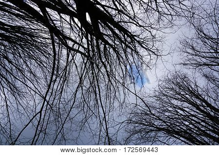 Horizontal image of bottom view of silhouette black tree branches.