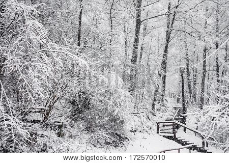 Fairy winter forest in the snow. Winter time. Heavy snowfall. Trees in the snow. Beautiful landscape. The trunks and branches of trees. Stairs to the hill. Mountain landscape