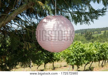 Japanese Pink Lantern Hanging In A Tree At The Bottom Of The Garden