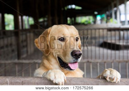Brown dog stood and wait over the cage