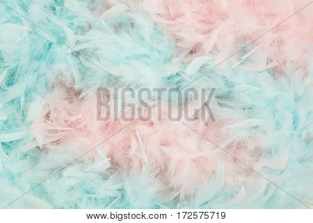 Soft blue and pink feathers from a boa in a total frame