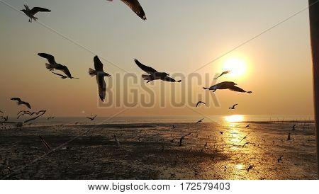 sunset seagulls skyline nature flying sky landscape