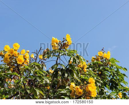 Yellow flower blooming on the top of the large tree.