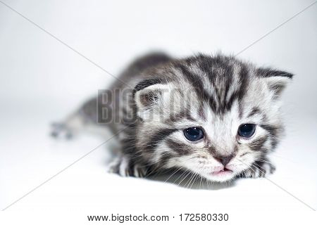 muzzle kitten striped baby portrait kitty baby