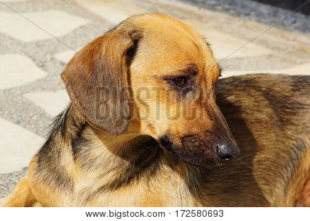 Sad red dog lying on a stone floor. Loneliness