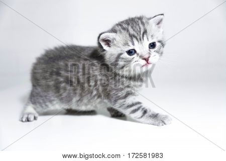 Tabby kitten on a white background. Very nice cute baby kitten