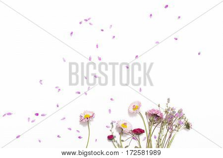 Lay flat wildflowers isolated on a white background floral pattern of flowers and blue petals twigs of the plant annual grasses