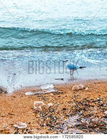 Lonely seagull under staying under rain near the sea