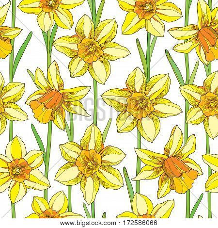 Vector seamless pattern with outline narcissus or daffodil flower in orange and yellow with green foliage on the white background. Floral background with narcissus for spring design in contour style.