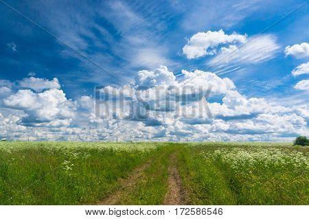 Fields of Sunlight Vibrant Colors
