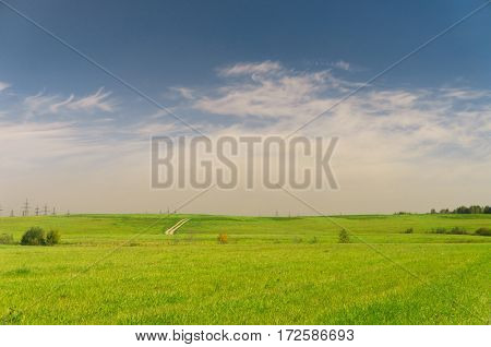 Vibrant Nature Grass Land