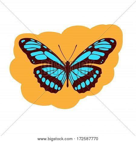 Beautiful tropical butterfly Heliconidae on a orange
