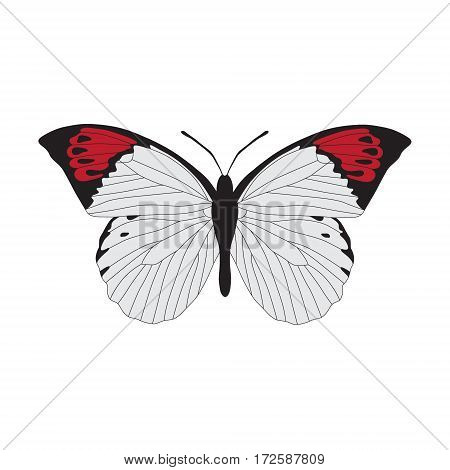 Beautiful white-red butterfly on a white background