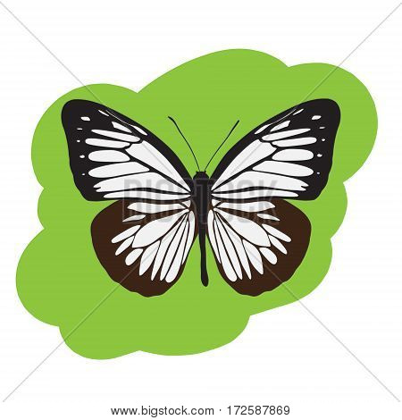 The beautiful butterfly Pieridae on a green