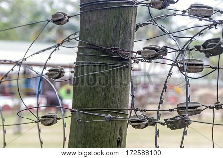 Close-up of tangled barbed wire connections on vintage wooden post on blurred background