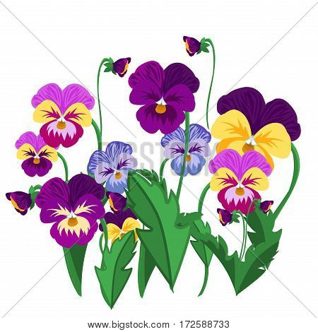 Set of pansy flowers violet bloom garden plant vector illustration. Nature colorful summer beauty pansies flower. Romantic garden viola plant spring pansies floral blossom.