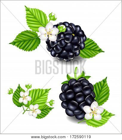 Composition of ripe blackberries , flowers and leaves. Sweet fruit. Forest berry. Dessert, juice packaging, agriculture theme design.