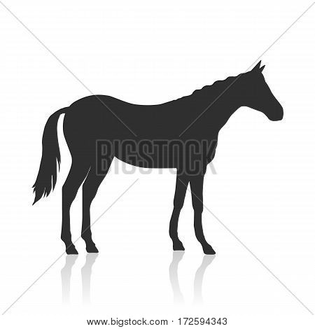 Sorrel horse black vector. Flat design. Domestic animal. Country inhabitants concept. For farming, animal husbandry, horse sport logo illustrating. Agricultural species. Isolated on white