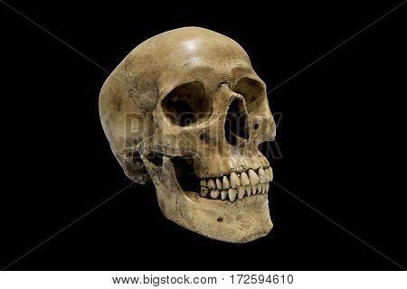 Human Skull Isolated On Black Background.